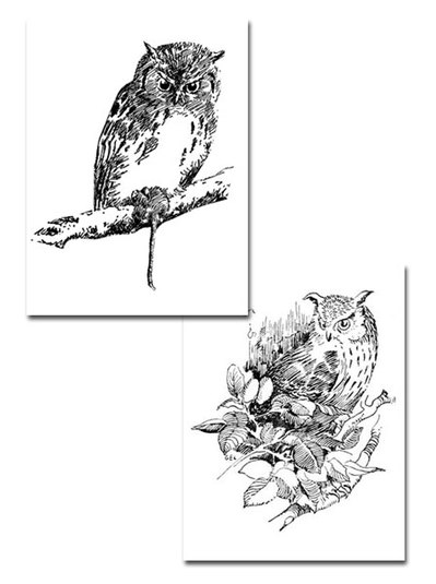 colouring page,free printable,owl