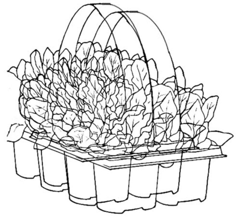 colouring page,garden,poster  - Bunnings Pack Poster Printable to Colour