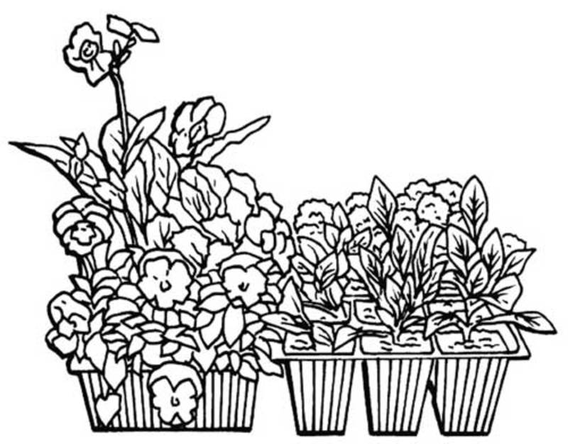 colouring page,garden,poster  - Bunnings Flower Seedlings Poster Printable to Colour