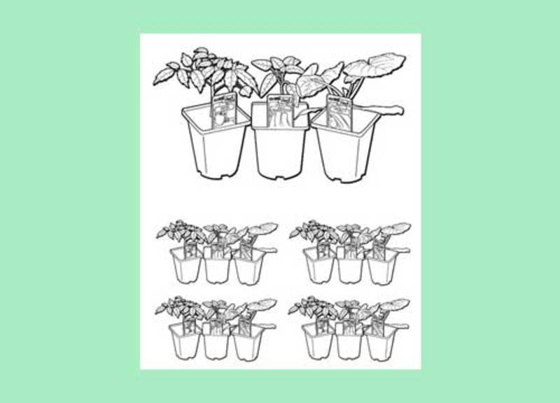 colouring page,garden,seedlings  - Bunnings Vege Printable to Colour