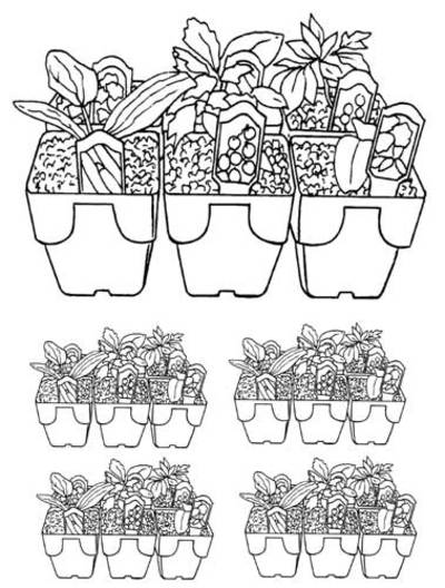 colouring page,garden,seedlings
