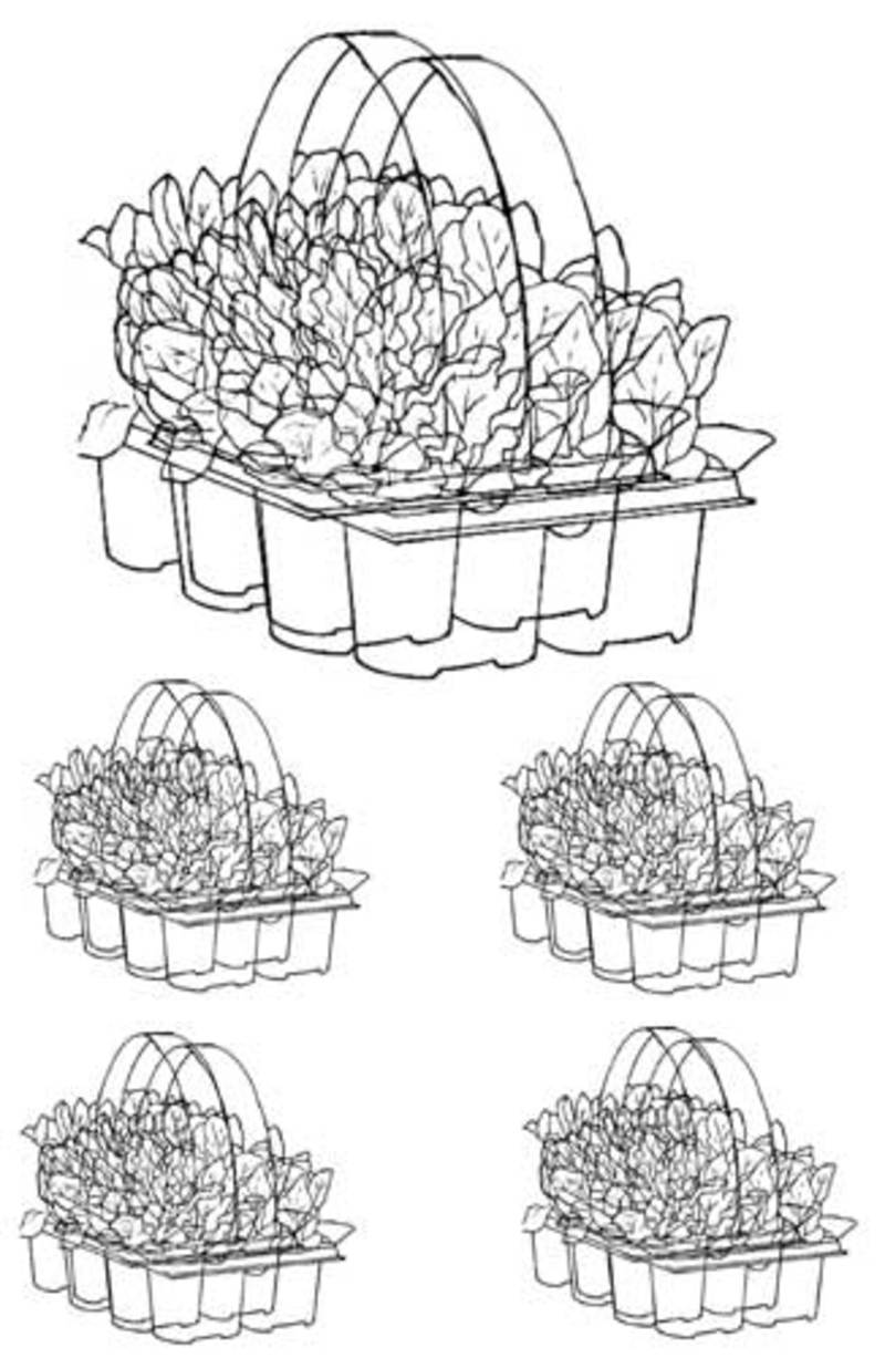 colouring page,garden,seedlings  - Bunnings Pack Printable to Colour