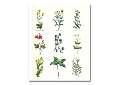 herbs,scrapbooking,cardmaking,collage,printables
