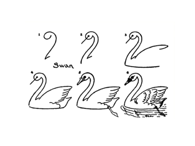 printablesdrawinghow to drawpublic domaindrawing series1animalsswanbirds draw swan image 1 - How To Draw Printables