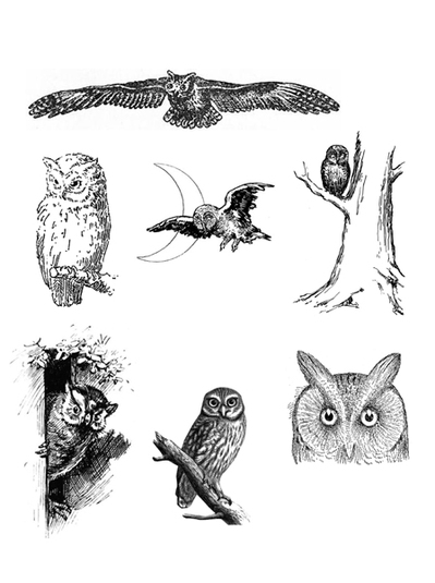 vintage,owl,animal,free vintage printable,collage